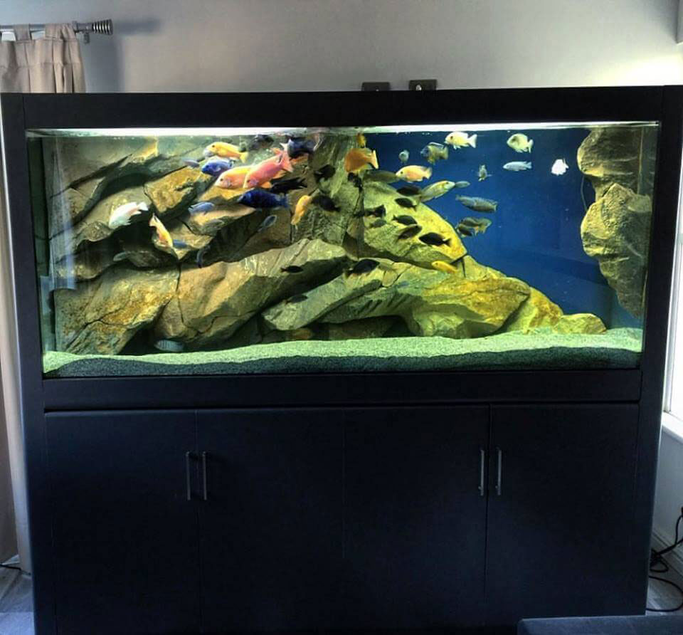 3D aquarium background in a wall mounted fish tank
