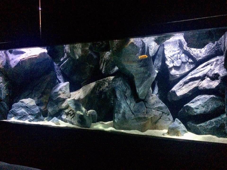 3D aquarium background, aquadecor model F in a aquarium