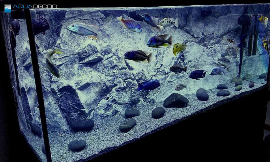 3d slim aquarium backgrounds with rock as additional decorations