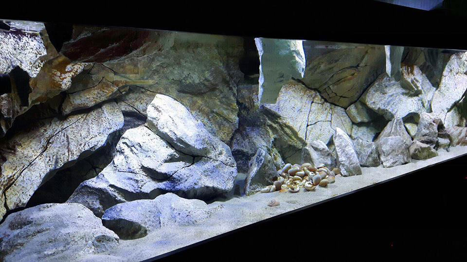 aquarium background, our model massive rocks, in aquarium