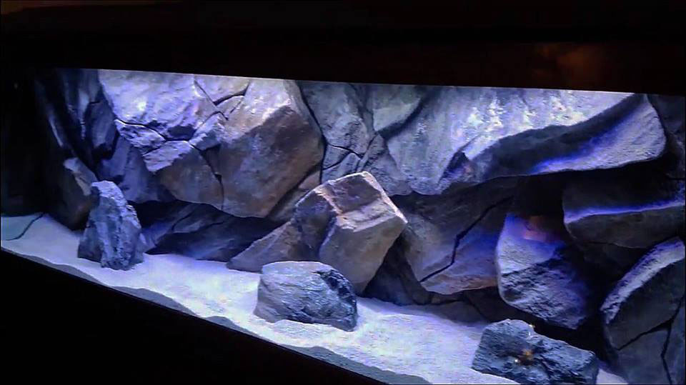 aquarium background massive rock model in aquarium