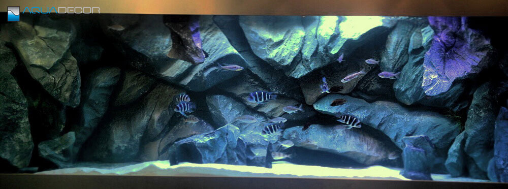 3D aquarium background in a fish tank