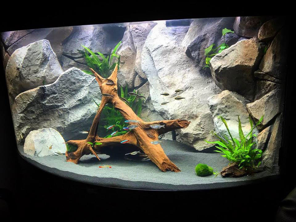 aquarium background model classic rock
