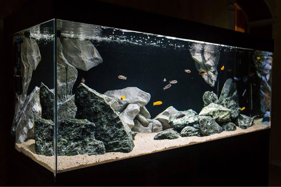 3D fish tank background in an aquarium