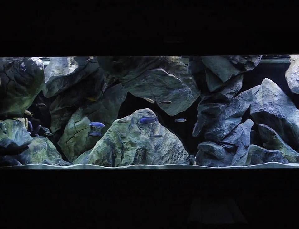 Realistic aquarium background in a fish tank