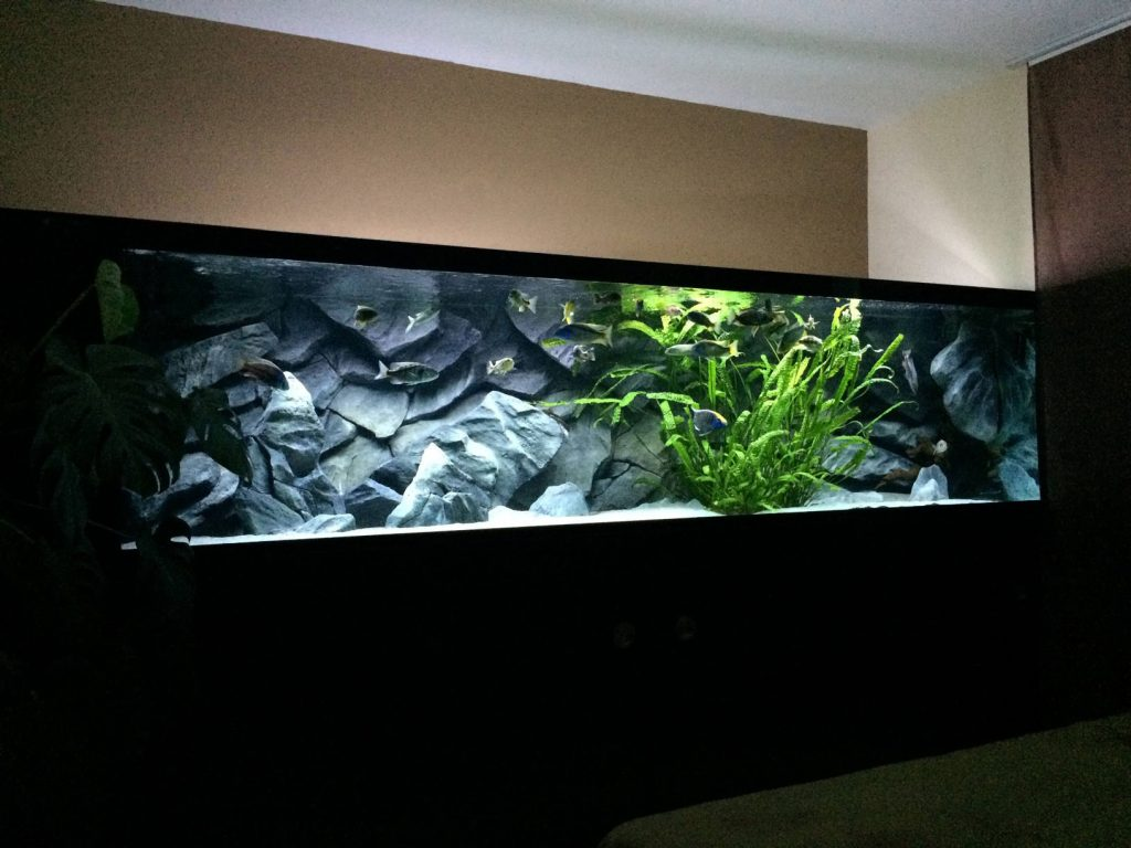 rock aquarium background in large aquarium with additional decorations