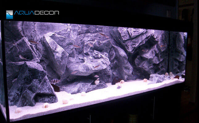 aquarium background, our model classic rock in an aquarium
