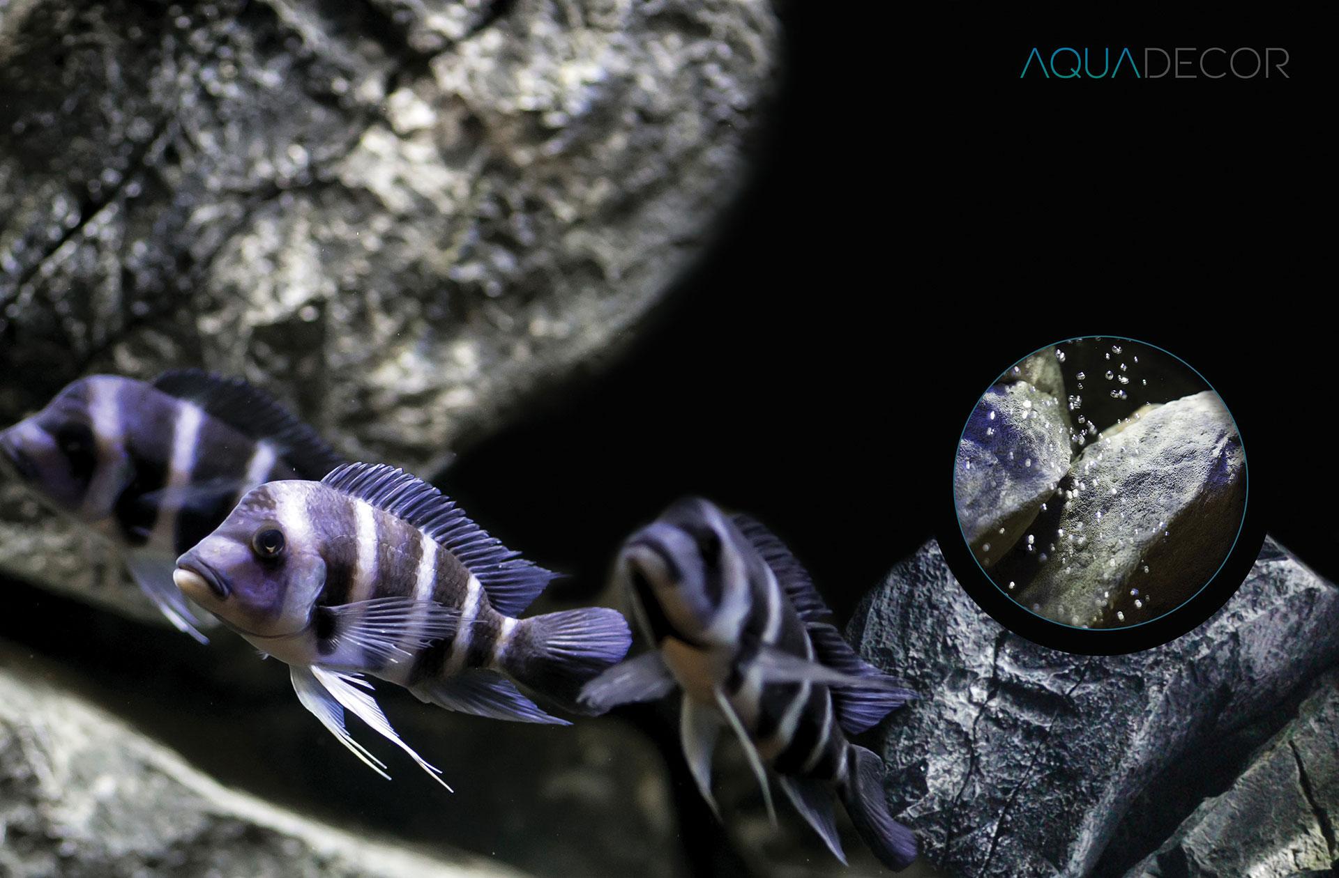 aquadecor-aquarium-backgrounds-experience