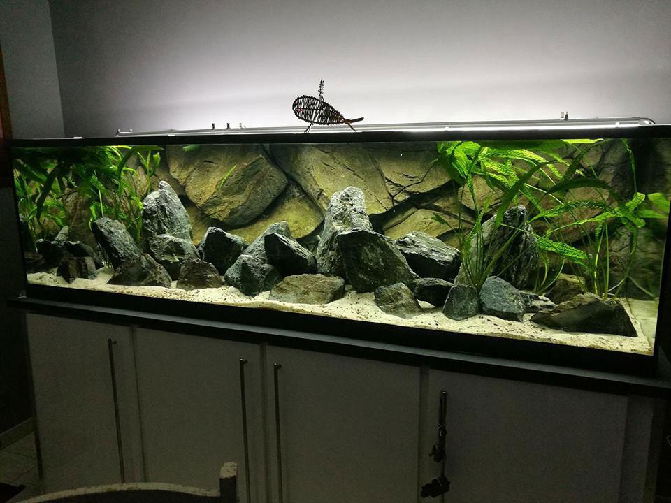 classic-rock-aquarium-background-aquadecor-011