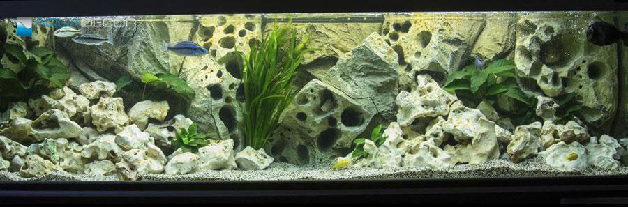 aquarium decorated with 3D porus rock aquarium background