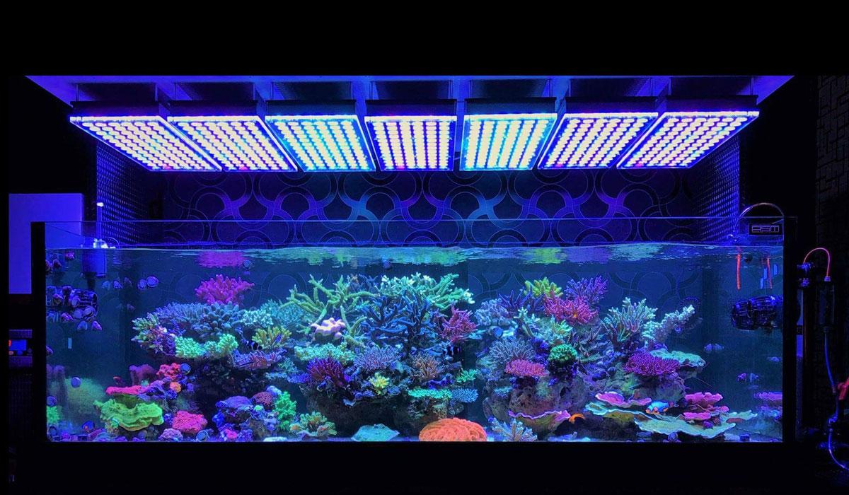 aquarium lightning