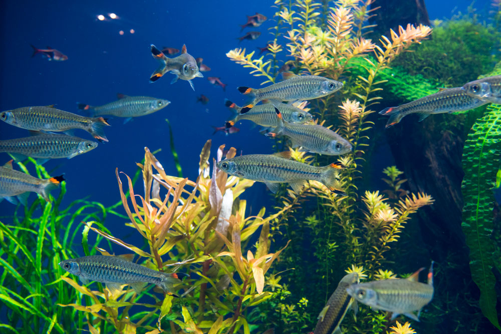 aquarium environment - Aquarium and Aquaristics