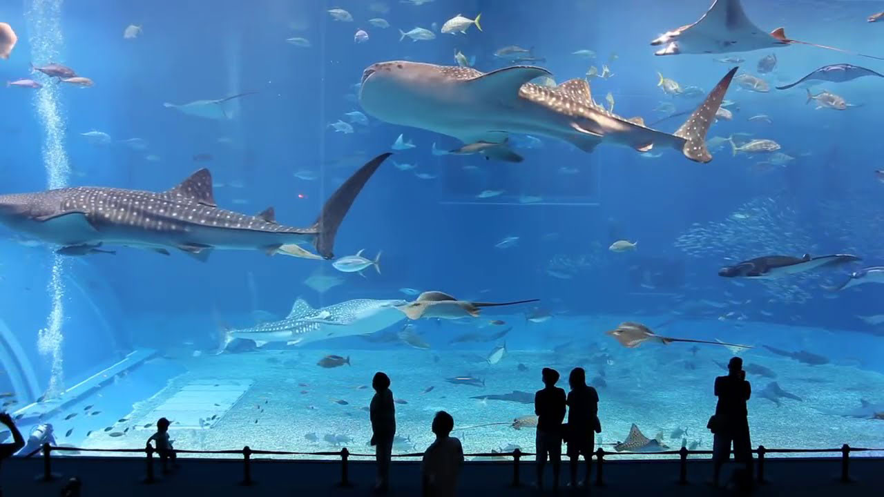 largest aquarium in japan