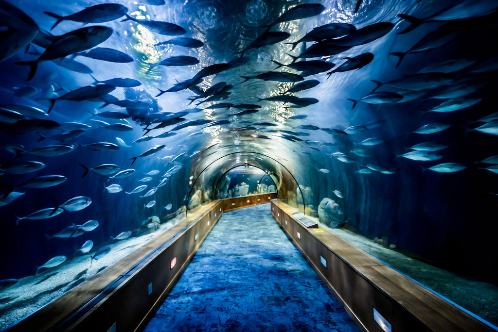 biggest aquariums - loceanografic