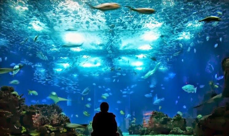 oceanario lisboa aquarium