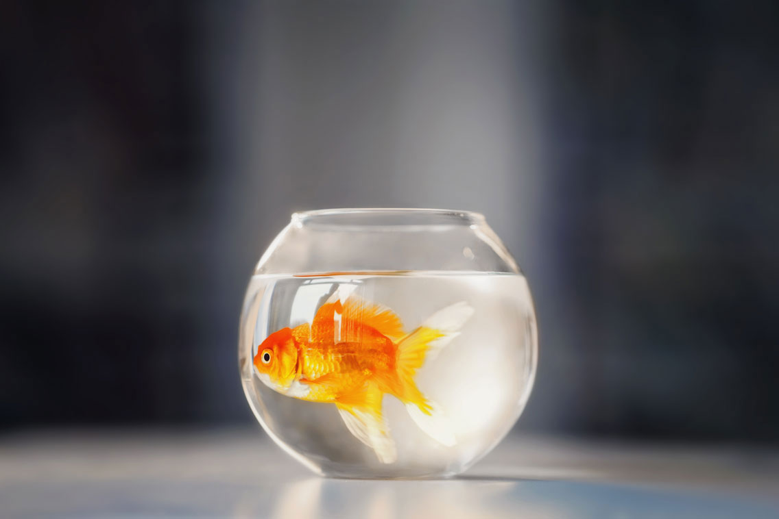 how to change water in aquarium